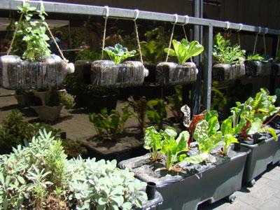 jardin vertical en bouteilles plastiques